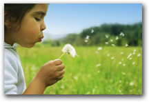 Girl blowing dandelion in good air quality.